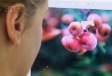 صورة اختبار: أدوبي Photoshop CC يتصدر برامج تحرير الصور