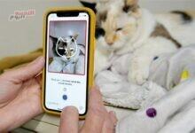 صورة تطبيق على الهاتف للتعرف على صحة القطط النفسية